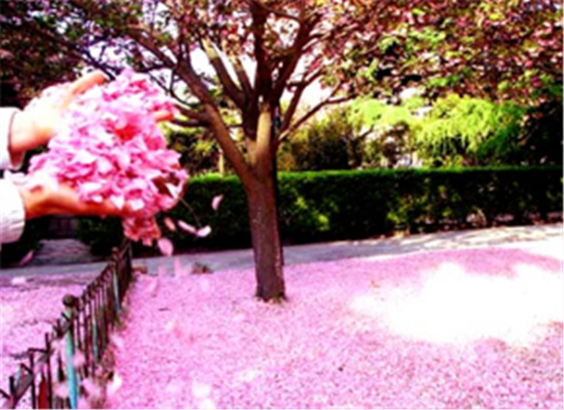 名护樱花节