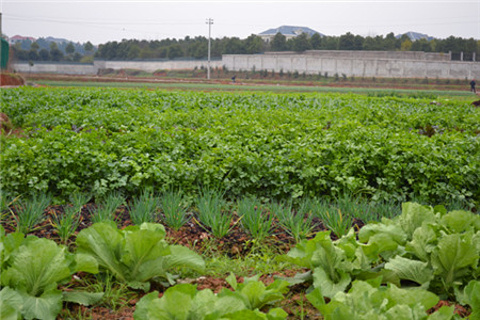 浩博有机农场