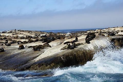 海豹岛的图片