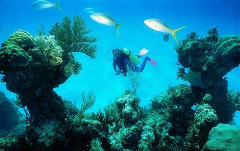 亚龙湾爱琴海西排潜水
