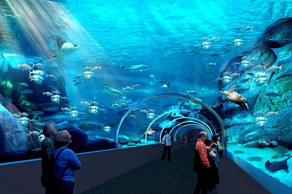 两洋水族馆旅游图片