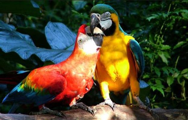 鸟园旅游图片