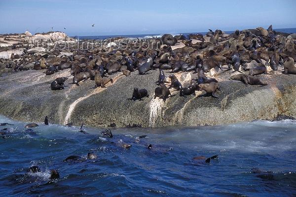 海豹岛旅游图片