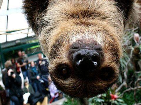 多特蒙德动物园旅游景点图片