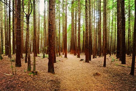红木森林公园