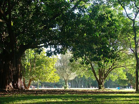 伊比拉普埃拉公园