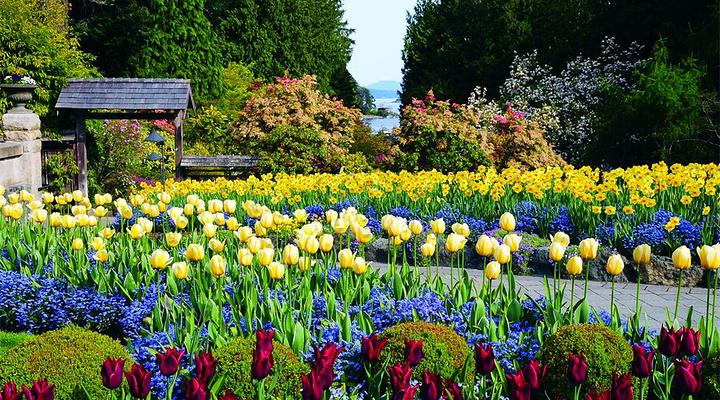 布查特花园旅游图片