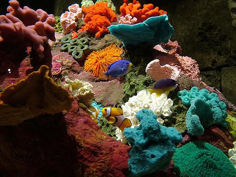 海洋世界水族馆