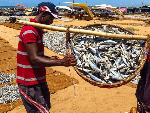 尼甘布中心鱼市场旅游景点图片