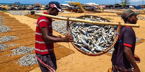 尼甘布中心鱼市场的图片