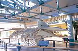捕鲸村博物馆
