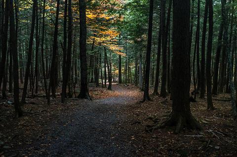 奥德尔公园的图片