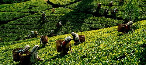 茶叶博物馆