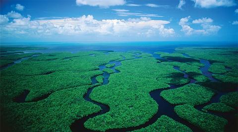 大沼泽地国家公园