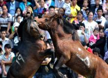 中国芦笙斗马节