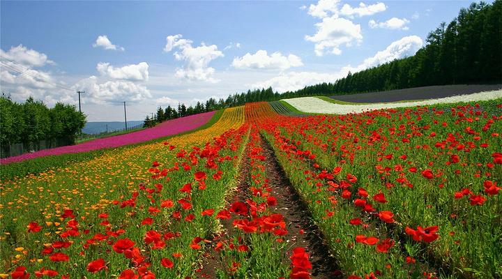 富田农场旅游图片