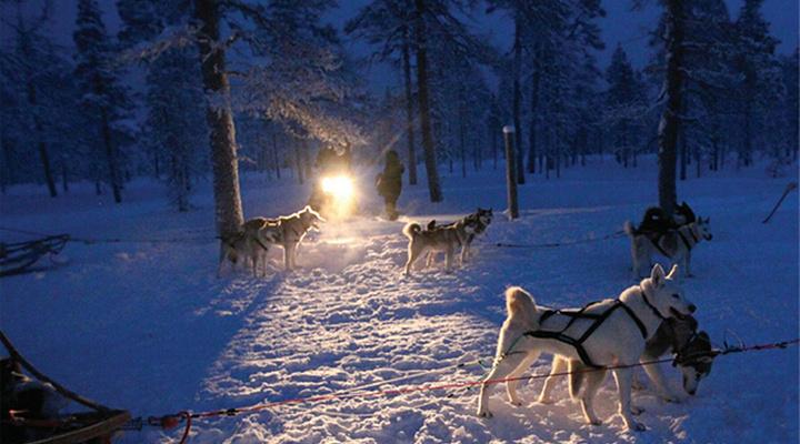 夜幕下巡视的雪橇犬旅游图片