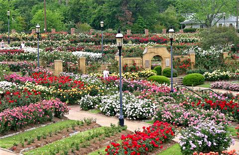 市立玫瑰园