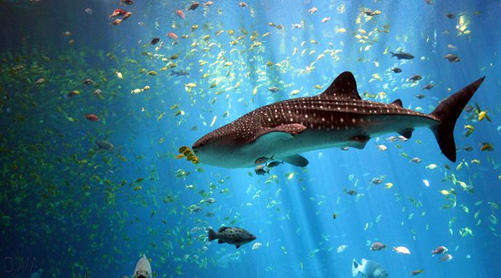 达拉斯世界水族馆旅游图片