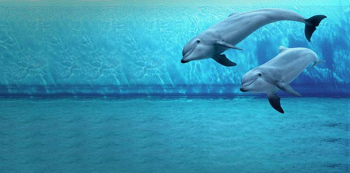 热那亚水族馆旅游图片