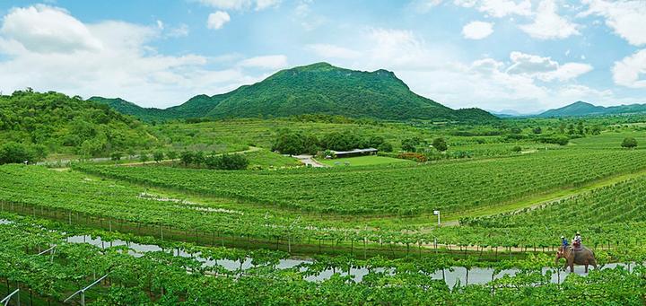 华欣山丘葡萄园旅游图片