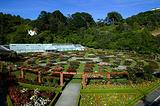 惠灵顿植物园