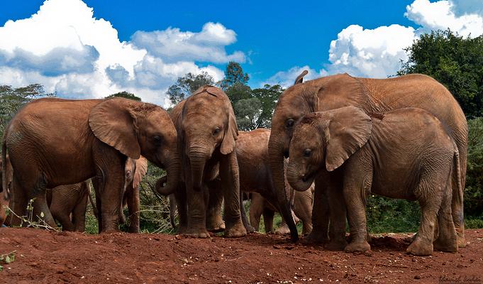 大卫·谢尔德里克野生动物基金会旅游图片