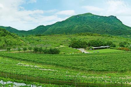 华欣山丘葡萄园Hua Hin Hills Vineyard