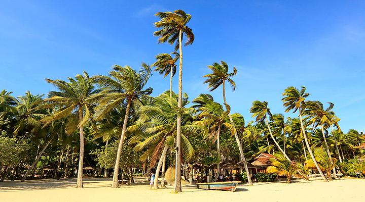 东郊椰林旅游图片