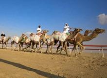 Al Adhafra 节