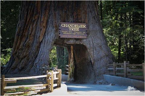 红杉树国家公园