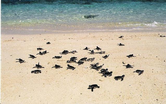 海龟岛旅游图片