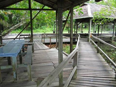 Kampung Panchor Dayak温泉旅游景点图片