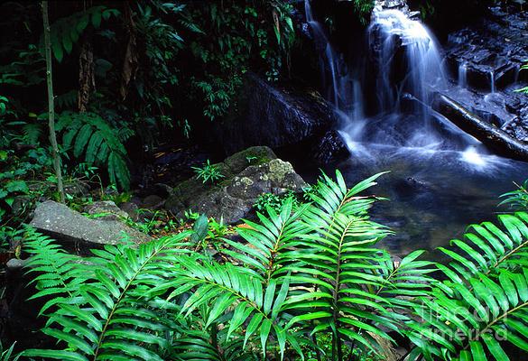 厄尔尼诺云雀国家森林公园旅游图片