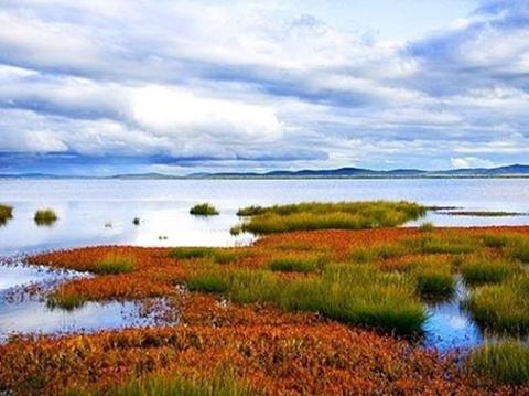 日干乔大沼泽的图片