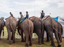 国王杯大象马球锦标赛
