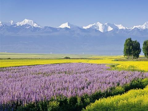 昭苏草原的图片
