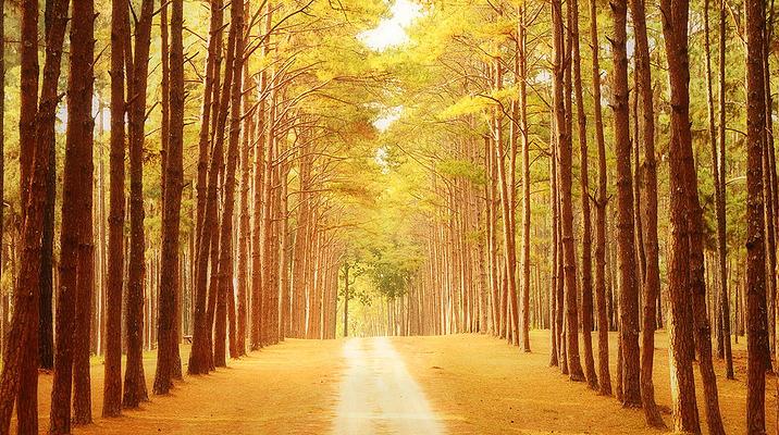 海边松林花园旅游图片