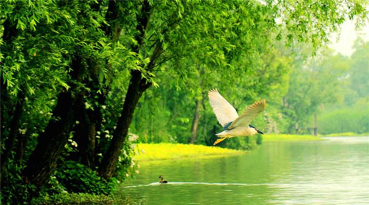西溪湿地旅游图片