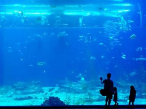 济州岛Aqua Planet韩华水族馆
