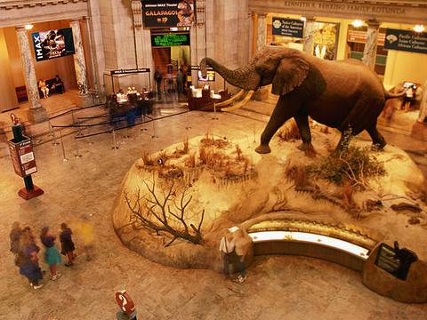卢森堡国家自然历史博物馆旅游景点图片