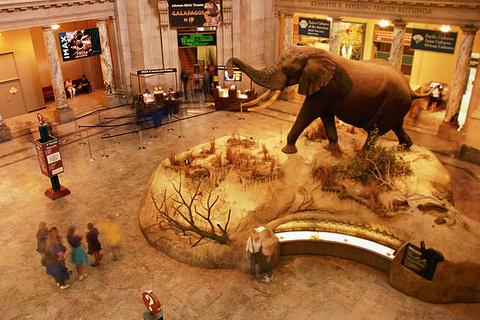 卢森堡国家自然历史博物馆的图片