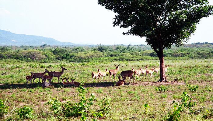 大田坡鹿保护区旅游图片