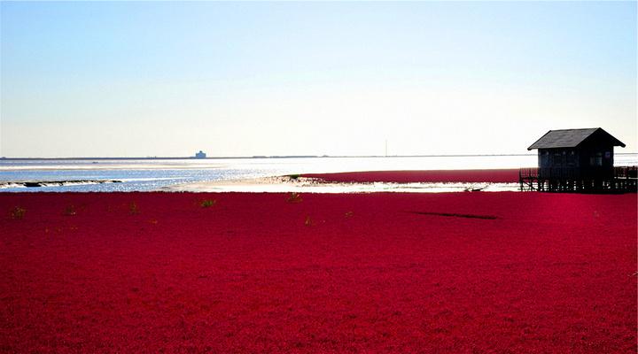 红海滩旅游图片