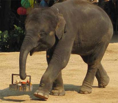 清道大象训练中心的图片