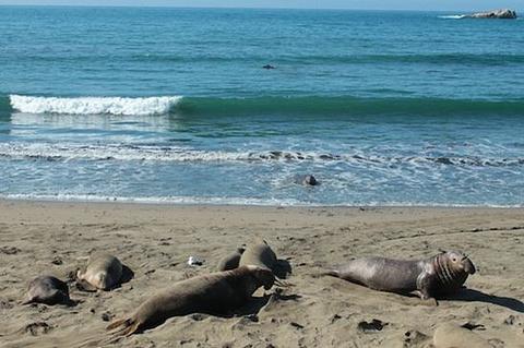 象海豹聚集区