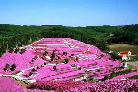 富士芝樱祭