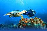潜水和浮潜