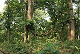 原始森林探险