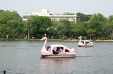 坐天鹅船游玩湖景